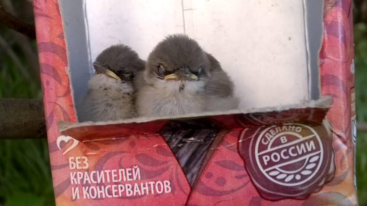 Птенцы потеряшки