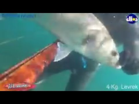 Fishing - 4 kg Seabass