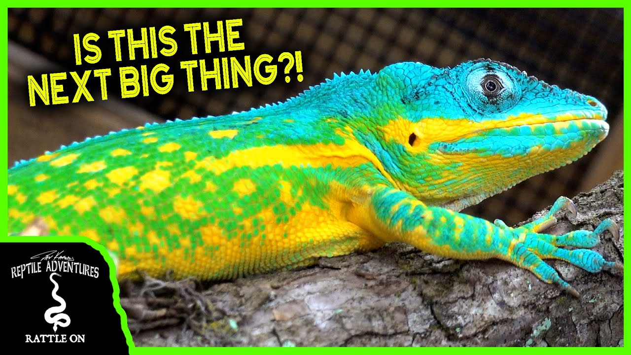 THE NEXT BIG THING IN REPTILES! (with Ron St Pierre) - download from YouTube for free