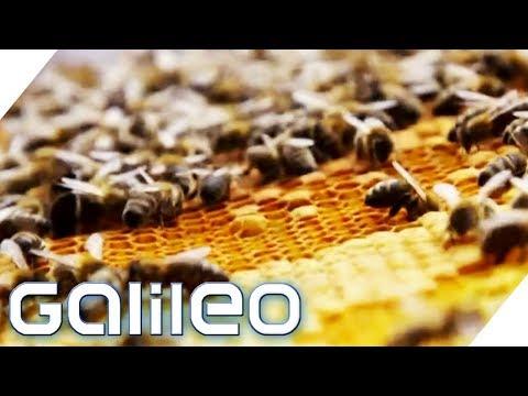 90€ pro Glas! Was macht den Manuka-Honig so wertvoll?   Galileo   ProSieben