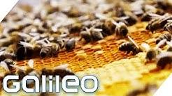 90€ pro Glas! Was macht den Manuka-Honig so wertvoll? | Galileo | ProSieben