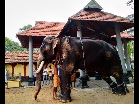 Mangalamkunnu Karnan, Chaithram Achu & Varadiyam Jayaram - Kerala Elephant Heroes