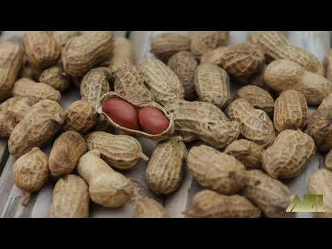 peanut-&-packing-peanut-moisture-matters