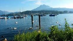 Yacht - Club Luzern