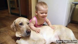 Baby Girl playing with Labrador Retriever - Funny Dogs and Babies