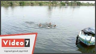 أطفال يهربون من الحر بالاستحمام فى مياه نهر النيل بكفر الشيخ