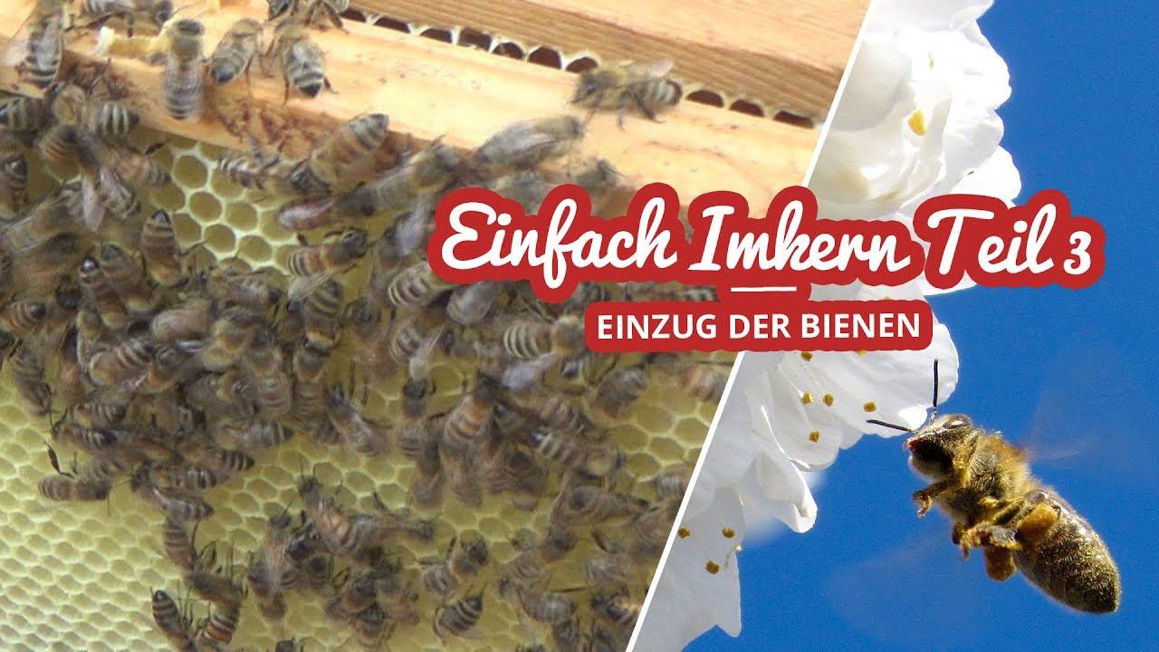 Einfach Imkern Teil 3 | Einzug der Bienen Artikelbild