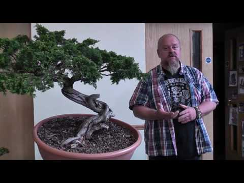 Bonsai Demo by Graham Potter