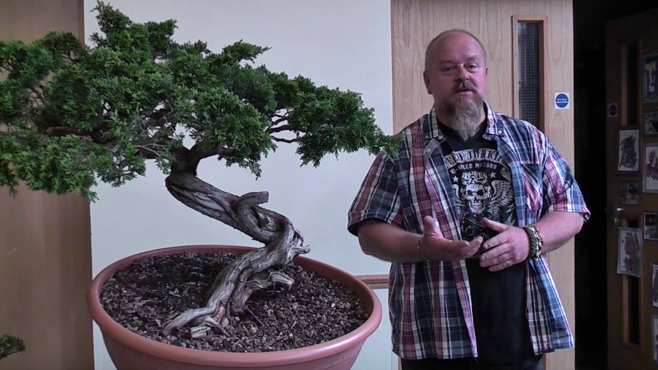 Bonsai Demo By Graham Potter Youtube