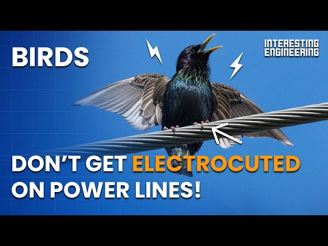 Why don't birds get electrocuted on power lines?