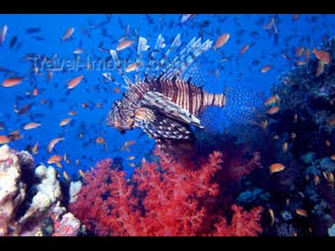 Reefs and wrecks of Red Sea (extended)