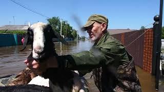 В Игнатьеве тонут животные. Люди передвигаются по пояс воде