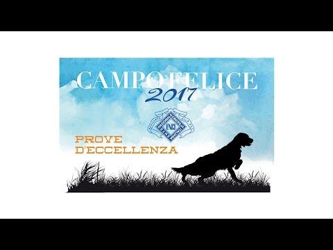 CAMPO FELICE 2017 - ECCELLENZA SETTER