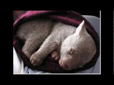 Wombat Wobble - Greg Englert Jazz Band