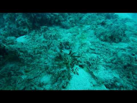 Magnum Sea Cucumber - Reef Magic Cruises, Cairns AUSTRALIA