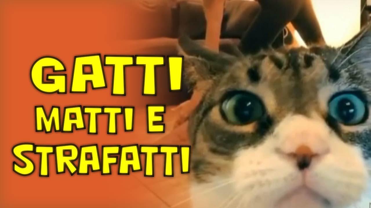 Gatti strafatti catanesi parte 1 youtube for Sfondi gatti gratis