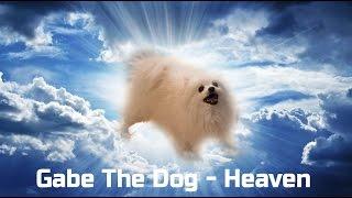 Gabe The Dog - Heaven