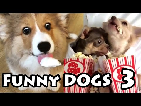 Best Funny Dog Videos #3 | Try Not to Laugh Compilation 2019
