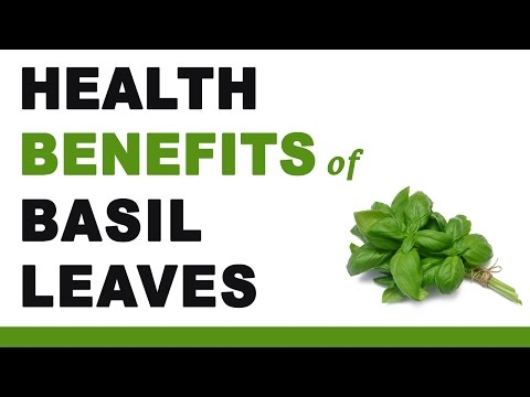 Health Benefits of Basil Leaves