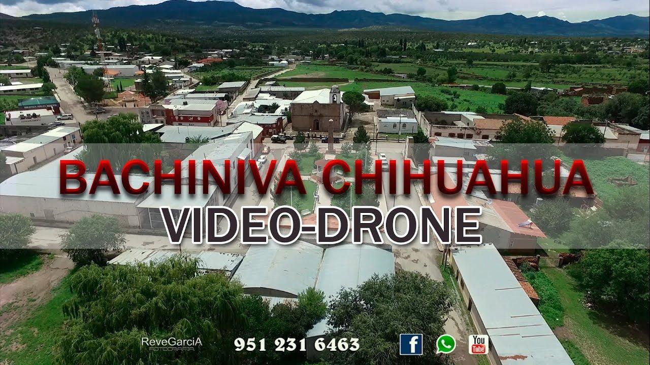 Bachiniva Chihuahua Youtube