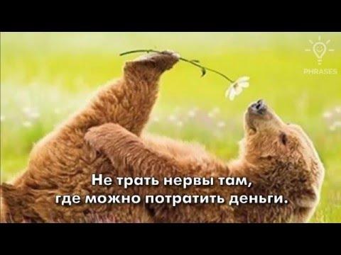 Про жизнь! » Смешные приколы » Юмор без границ - Prikol