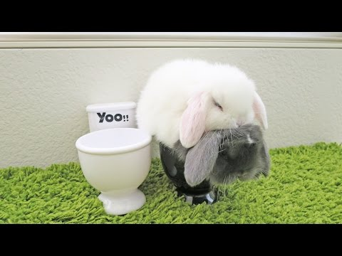 Baby Bunnies Using The Toilet!