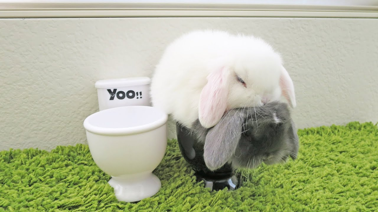 Baby Bunnies Using The Toilet Youtube