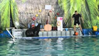 Шоу дельфинов Барнаул 04 10 15г 1