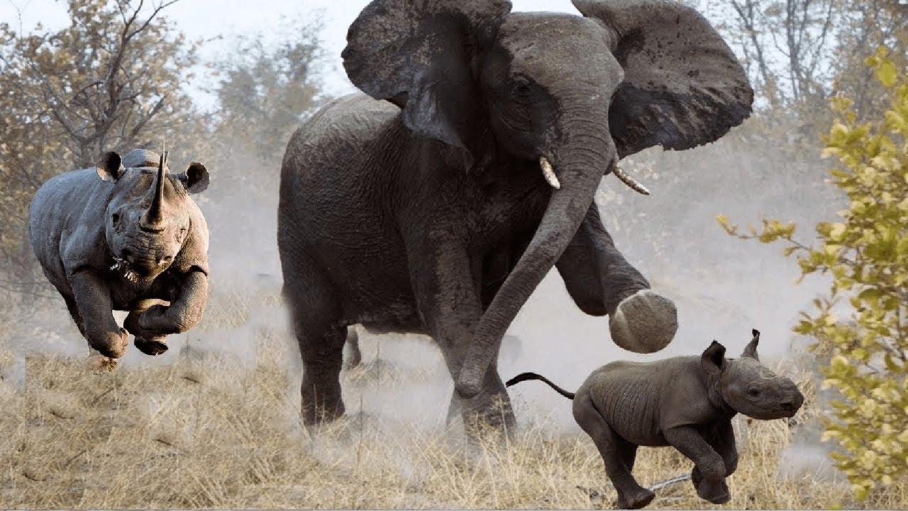 НОСОРОГ В ДЕЛЕ! НОСОРОГ против Слона Буйвола Бегемота
