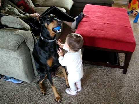 Ребенок и доберман