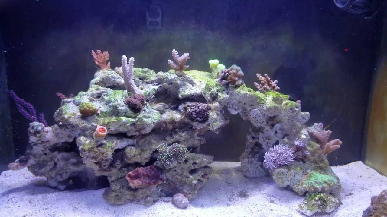 Fluval Evo 13 5 Newbie Tank Green And Purple Coralline Algae Start Youtube