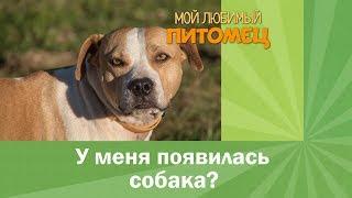 У меня появилась собака?