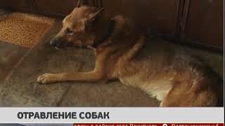 Отравление собак. Новости. 12/09/2019. GuberniaTV