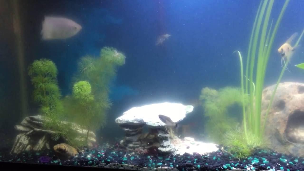 Freshwater aquarium fish ecosystem - My New Aquariums All Set Up Looks Like Some Good Ecosystems Bearded Dragon Freshwater Fish Saltwater