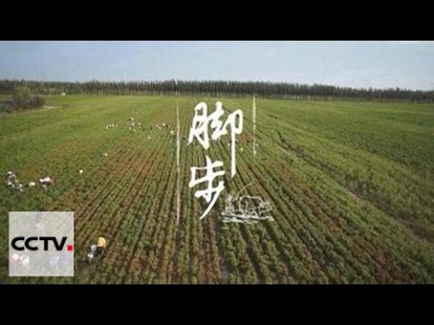 Китай на кончике языка 2-01