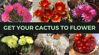 How to Make a Cactus Bloom (ABUNDANTLY) | Cactus Collection