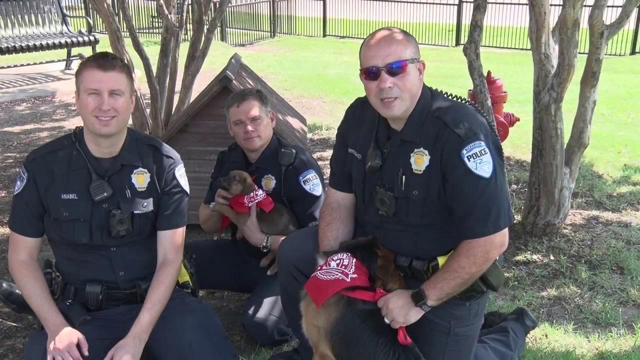 Dog Walker Watch | Richardson Police Department