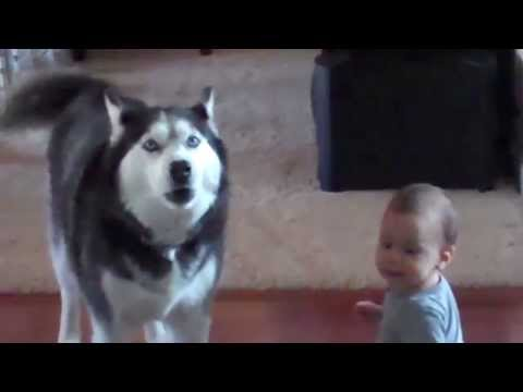 Dogs Are Awesome - Funny Animal Compilation