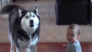 Dogs Are Awesome  Funny Animal Compilation