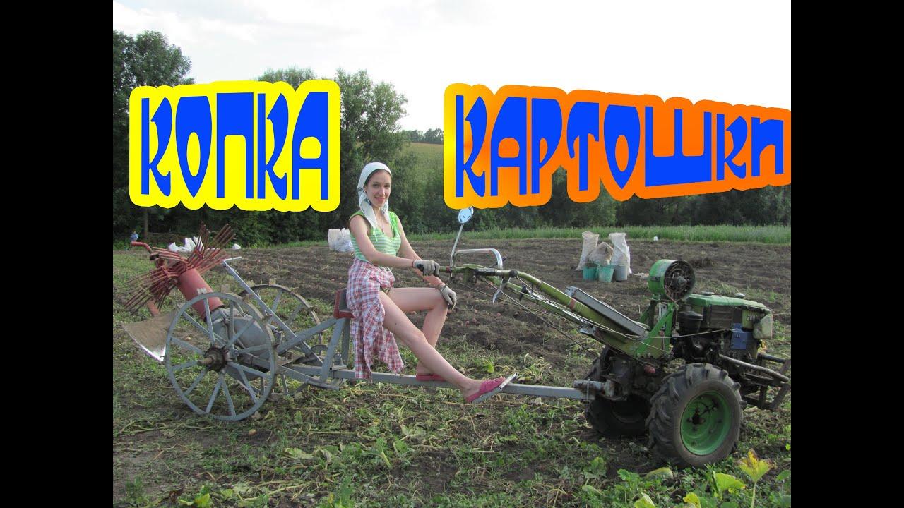 Копка картошки 2016 / Мотоблок ЗУБР