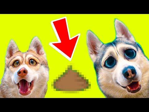 ЧТО МЫ НАШЛИ В ЛЕСУ? ЛУЧШИЕ СЕРИИ КАРАНТИНА!! (Хаски Бублик) Говорящая собака
