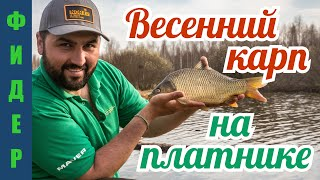 Секрет успеха на весенней рыбалке. Карп на фидер