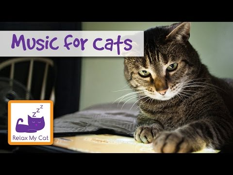 The Best relaxing Cat Music! Treat Your Cat with the Gift of Music!