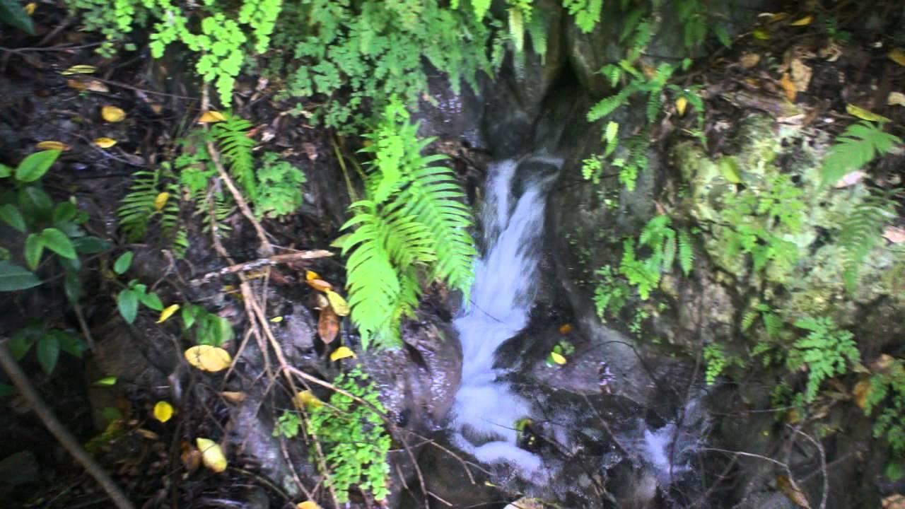 Jamaican Mountain Spring Water