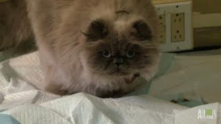 Fi\'s Follow-Up | My Cat From Hell