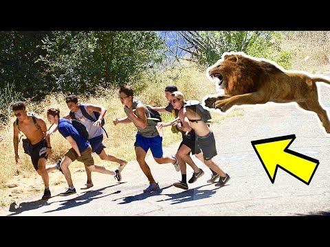 ESCAPED LION IN THE WOODS PRANK! (MUST WATCH!)