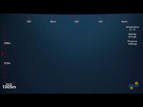ROV SuBastian Dive 111 - White Shark Cafe