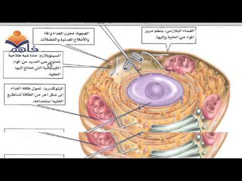 عالم الخلايا علوم الصف الاول المتوسط الفصل الثاني