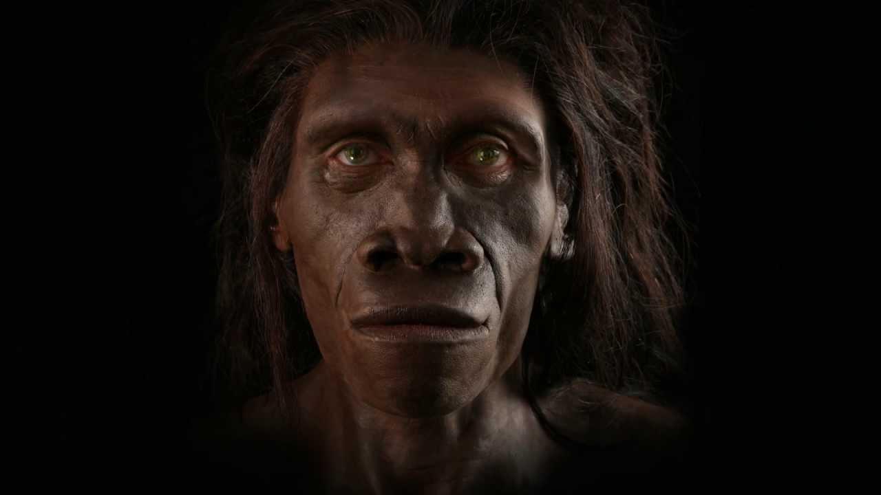 Homo erectus pekinensis - Forensic facial reconstruction