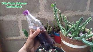 Como Prepara um Adubo Liquido para Adubar Cactos e Suculentas